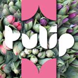 Tulip from ArtyType